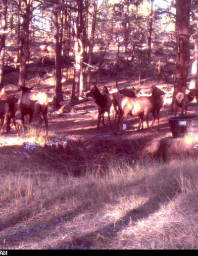 CC View of Elk on Ranch
